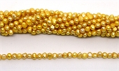 Fresh Water Pearl potato side drill 7x5mm Gold strand 72 beads-5 strands or more for $4.00 per strand-Beadthemup